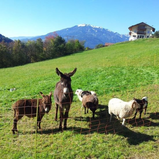 impressionen-vom-sieberlechnerhof-suedtirol-luesen-brixen-18