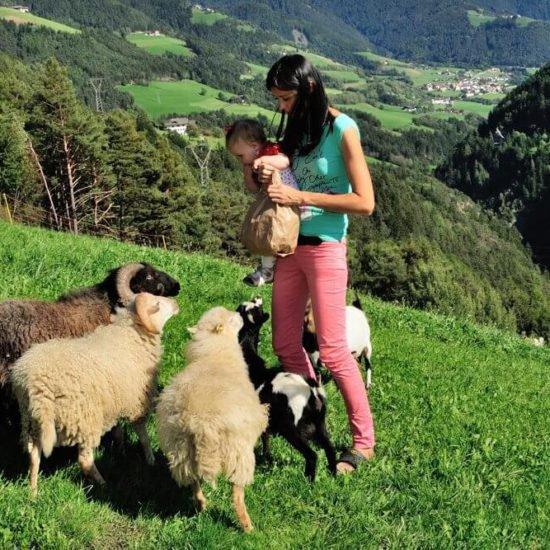 impressionen-vom-sieberlechnerhof-suedtirol-luesen-brixen-25